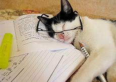 効率アップ間違いなし!勉強に集中する方法4選